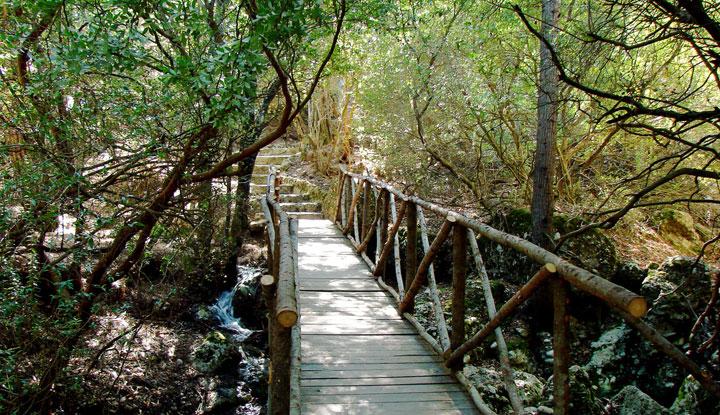 Мост в Долине бабочек.