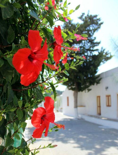 Цветы у монастыря.