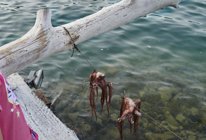 Осьминоги на верёвке.