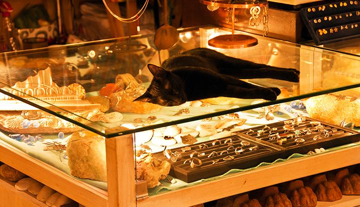 Кот на витрине.