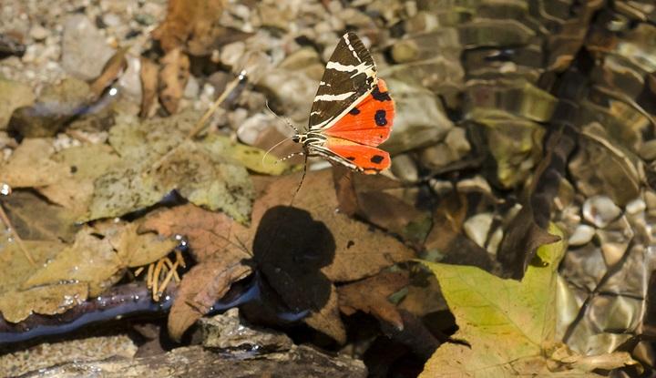 Долина бабочек.